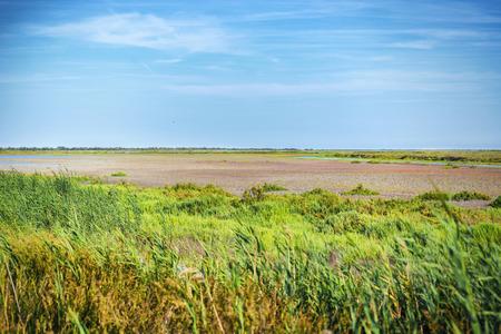 The dry Camargue landscape