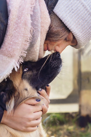 The girl hugs the dog, the dog touches its nose to the girls nose Banco de Imagens