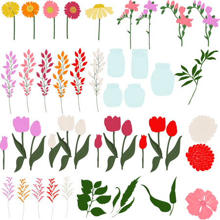 herbera: Set of freesia, dahlias, tulips, herbera, lily, leaves and jars on a transparent background