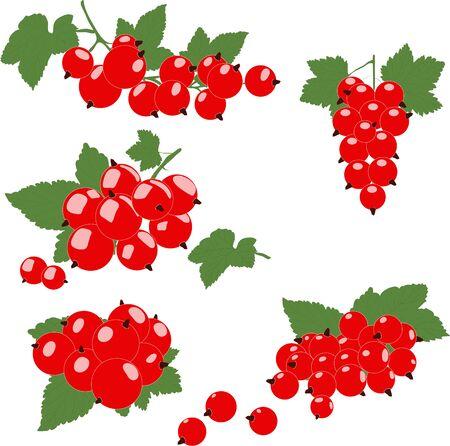 Rote Johannisbeere Cluster mit grünen Blättern. Vektor-Illustration.