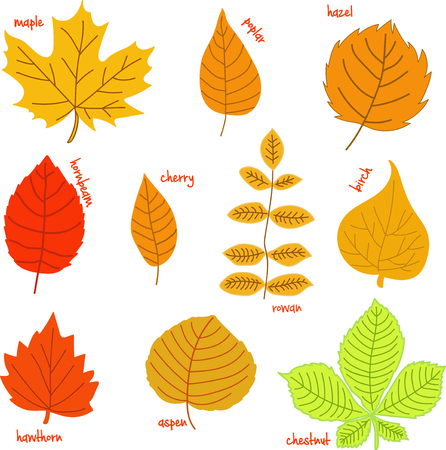 hazel: Autumn leaves with their names on a white background