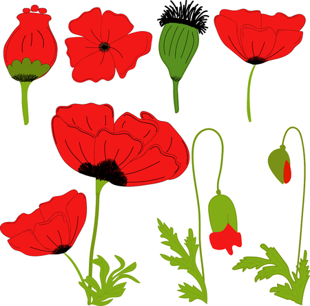 Separate elements flowers red poppy flowers leaves bolls separate elements flowers red poppy flowers leaves bolls buds on a transparent mightylinksfo