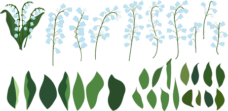 Individual parts of lilies of the valley on a transparent background, flowers and leaves Illustration