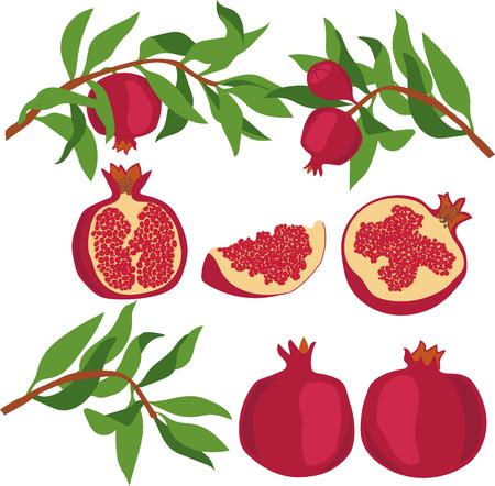 branch cut: Pomegranate. Set of Pomegranate. Vector illustration on a transparent background