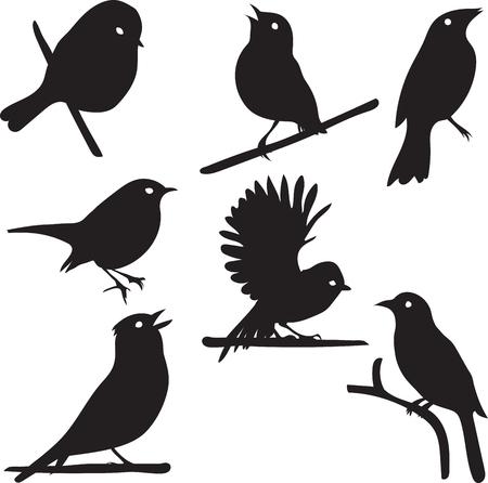 Uccello Sagome, uccello sul ramo, vettore di raccolta, isolato