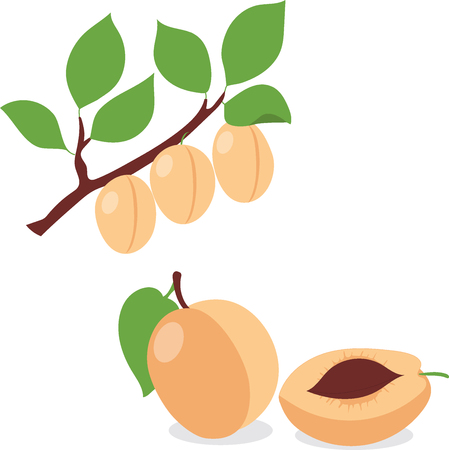 apricot kernel: Apricot. Set apricots, apricot pieces, collection of vector illustrations on a transparent background Illustration
