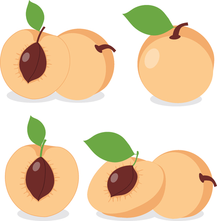 apricots: Apricot. Set apricots, apricot pieces, collection of vector illustrations on a transparent background Illustration