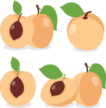 apricot: Apricot. Set apricots, apricot pieces, collection of vector illustrations on a transparent background Illustration