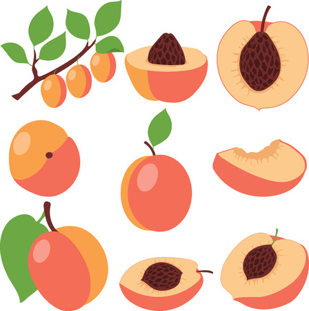 peaches: Peach. Set peaches, pieces and slices, collection of vector illustrations on a transparent background
