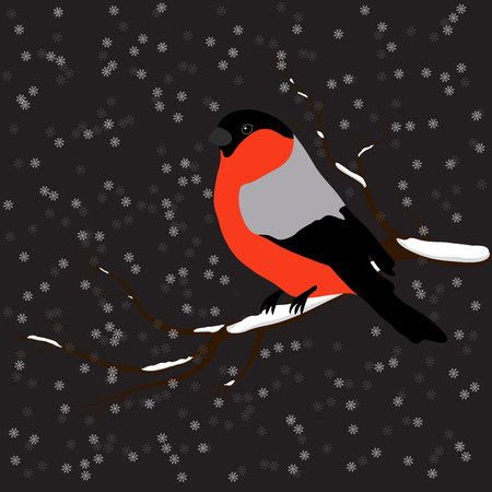 Bullfinch on the fir branch, snowfall. Winter or christmas vector illustration.
