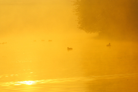 Foggy morning over the lake, fall trees reflected in water. Stock Photo