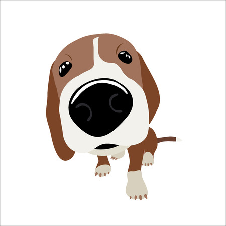 jack russel: Jack Russell Terrier with a large head and nose. Vector Illustration of a dog. Illustration