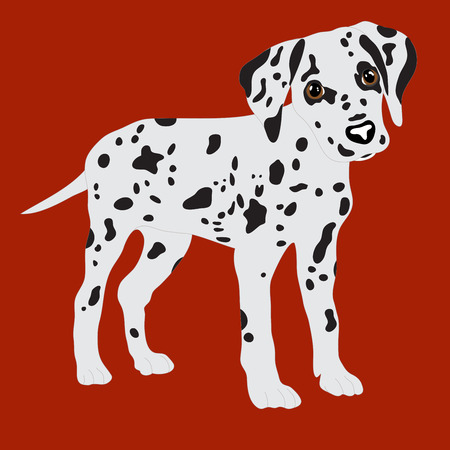 dalmatian: Dalmatians, cute puppy, sad. Vector Illustration Portrait of Dalmatian Puppy. Dog isolated