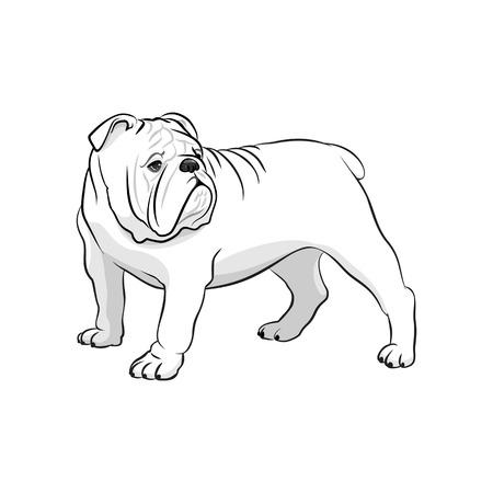 Engelse bulldog. Franse bulldog. Hond op een witte achtergrond. vector illustratie