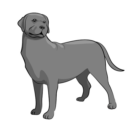 black labrador: Black Labrador Retriever Dog. Black & White Dog Vector Illustration
