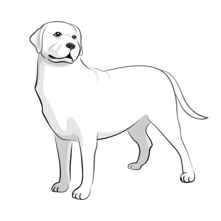 Labrador Retriver. Dog Black & White Vector Illustration Illustration