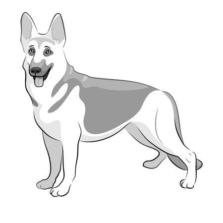 Shepherd German Dog Black & White Vector Illustration. Shepherd on white