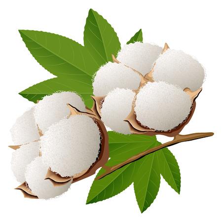 Realistic cotton branch vector illustration