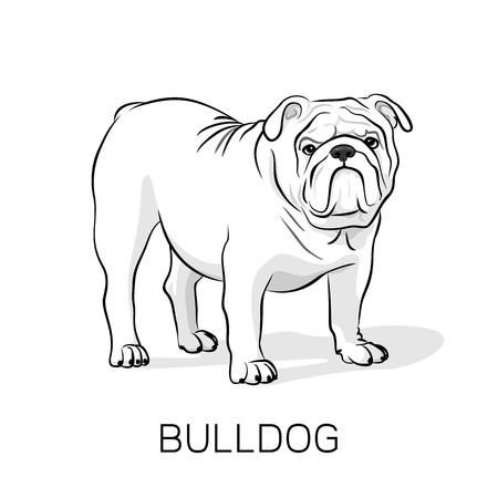 Dogo inglés de la historieta. Bulldog francés. Perro sobre un fondo blanco. Vector perro ilustración Ilustración de vector
