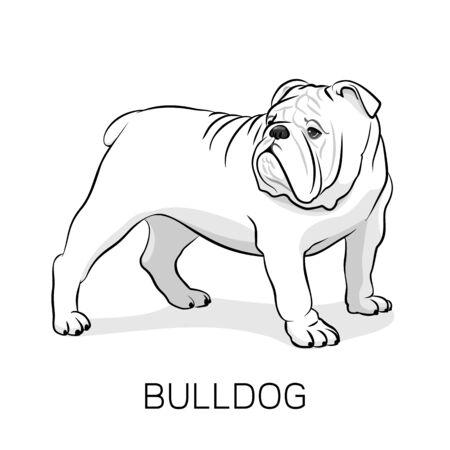 Dogo inglés de la historieta. Bulldog francés. Perro sobre un fondo blanco. Vector perro ilustración