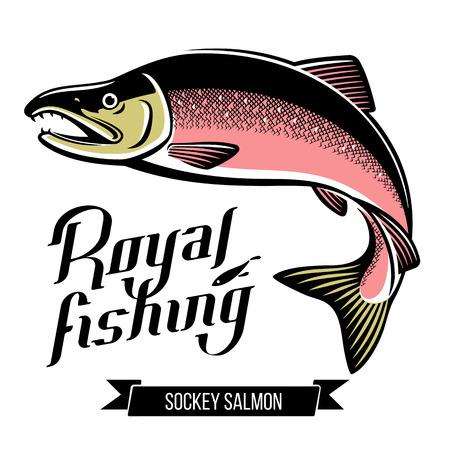 Sockey Salmon fish vector illustration Ilustrace