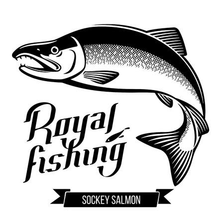 coho: Sockey Salmon fish vector illustration Illustration
