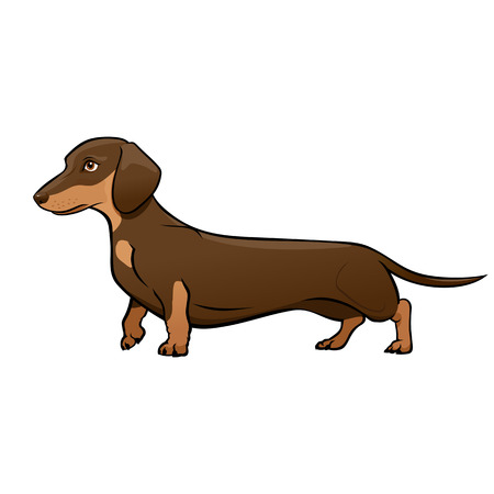 Dark Brown Dachshund. Dog vector illustration Illustration