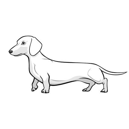ダックスフント犬の黒と白のベクトル図