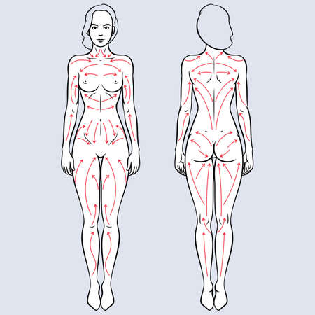 Lymphatic drainage dry brushing massages lines scheme. Nude female body vector illustration