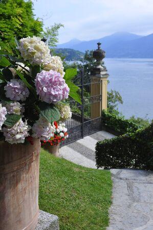 lake flowers: Hydrangeas and Como Lake