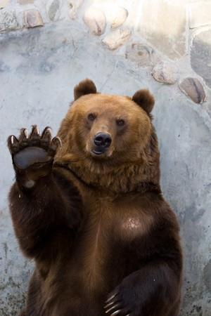The brown bear waves a paw. He welcomes visitors of a zoo and waits for an entertainment
