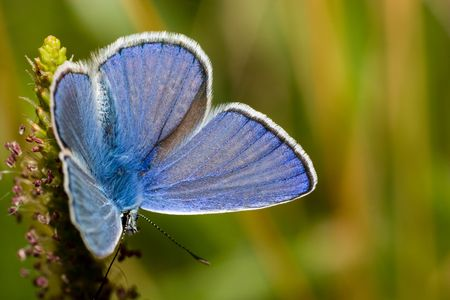 The beautiful bright butterfly sits on a plant. Stock Photo - 4745870