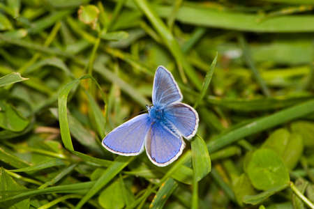 insecta: The beautiful bright butterfly sits on a plant.