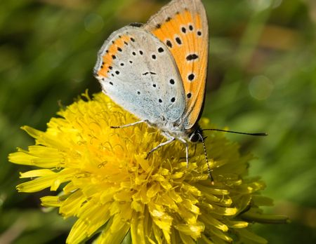 The beautiful bright butterfly sits on a plant. photo