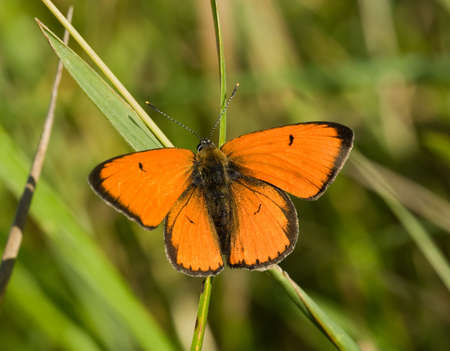 The beautiful bright butterfly sits on a plant. Stock Photo - 4745863