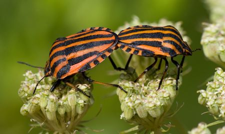 The beautiful striped bug sits on a plant. A close up. photo