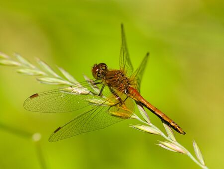 The beautiful dragonfly sits on a plant. A close up. Stock Photo - 4745881