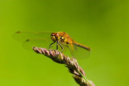 The beautiful dragonfly sits on a plant. A close up. Stock Photo - 4745874