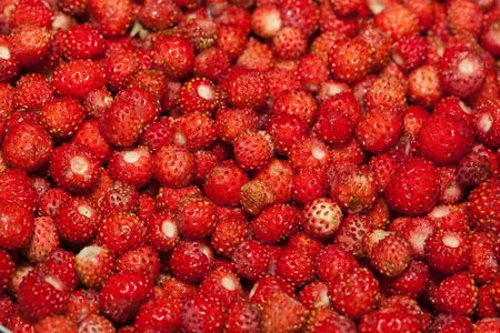 wild strawberry: Many red berries of wild strawberry as a background. Stock Photo