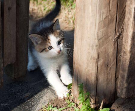 ingannare: Il piccolo gattino divertente svolge il buffone.