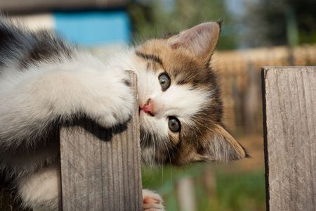 amusing: The small amusing gnaws a wooden fence. Stock Photo