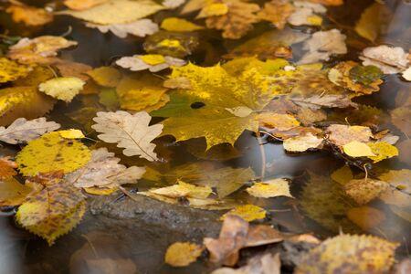 manifestations: Phenological manifestations of autumn in city park. Stock Photo