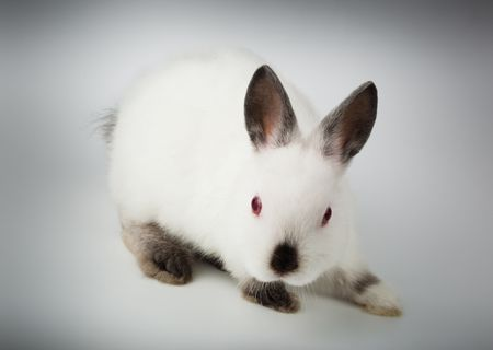 Nice white rabbit. It is cut out on a white background. Stock Photo - 6479141