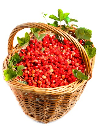 Ripe red berries (Fragaria vesca), Woodland Strawberry. photo