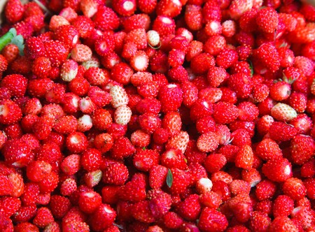 bacca: Ripe red berries (Fragaria vesca), Woodland Strawberry. Stock Photo