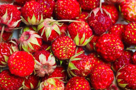 wild strawberry: Ripe red berries (Fragaria viridis), Wild Strawberry. Stock Photo