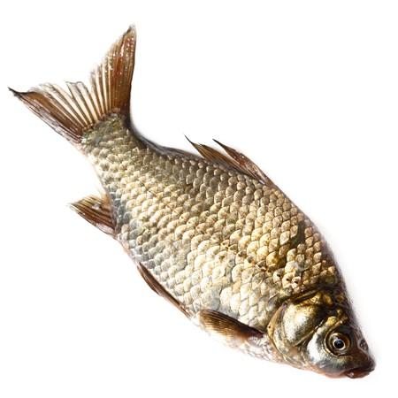 민물의: Freshwater fish in front of white background. 스톡 사진