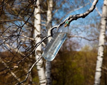 betula pendula: Bella primavera-paesaggio in una campagna. Russia, nella regione di Ryazan.  Archivio Fotografico