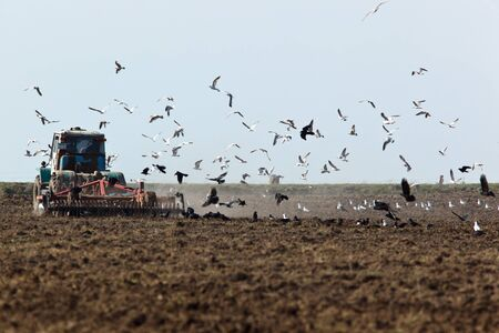 Rook, crow family, Corvus frugilegus on a ploughed field. Stock Photo - 7519272