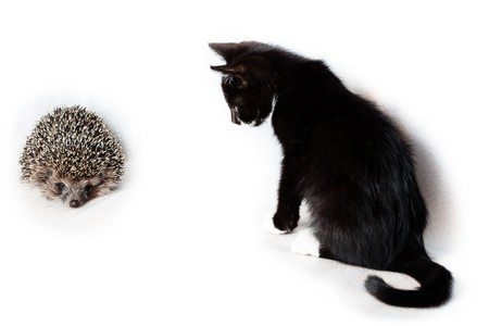 Kitten and hedgehog in front of white background, isolated. photo